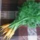 Zanahoria - Carrots
